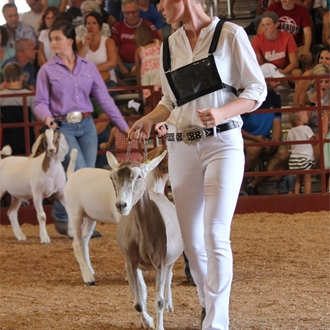 4-H DAiry Goat Show