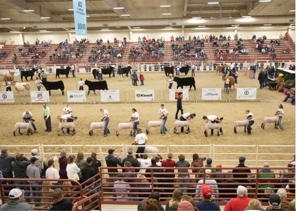 2019 transitions to Jr. Livestock Show