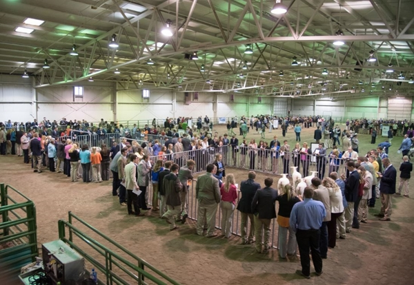 American Foods Group Livestock Judging