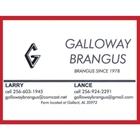 Galloway Brangus
