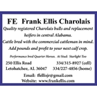 Frank Ellis Charolais