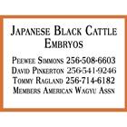Japanese Black Cattle Embyos