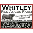 Whitley Red Angus Farm
