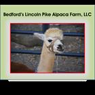 Bedford's Lincoln Pike Alpaca Farm, LLC