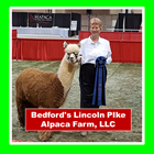 Bedford's Lincoln Pike Alpaca Farm, LLC