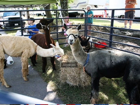 2013 Bedford County Fair Highlights