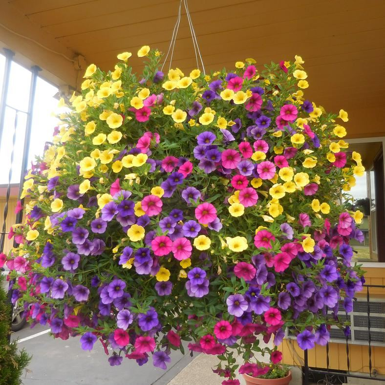 Flower Basket at Galaxie Motel, Philomath OR