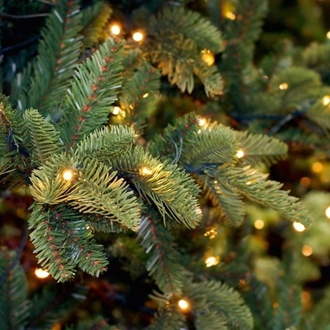 Pine boughs with small white lights in the boughs