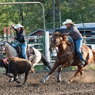 two cowgirls on horseback roping a calf