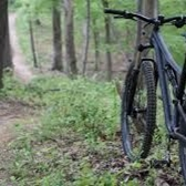 Photograph of mountain bike leaning up against a tree next to a trail in the forest