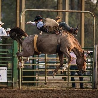 cowboy on bucking bronco