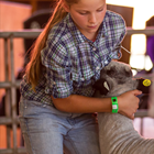 Photo 4-H youth with her sheep