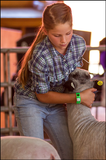 Photo: young 4-H girl holding her sheep's head during showing