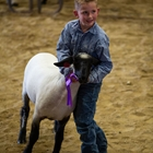4-H Market Sheep & Goat Weigh In & Record Books Checked - 4:00 - 5:00 PM
