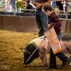 4-H Market Sheep, Goat & Swine Must Be in their Pens - 4:00 PM