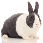 Entry 4-H & Open Class Rabbits - 2:00 - 6:00 PM