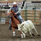 Ranch Sorting Competition - 7:30 - 9:00 PM