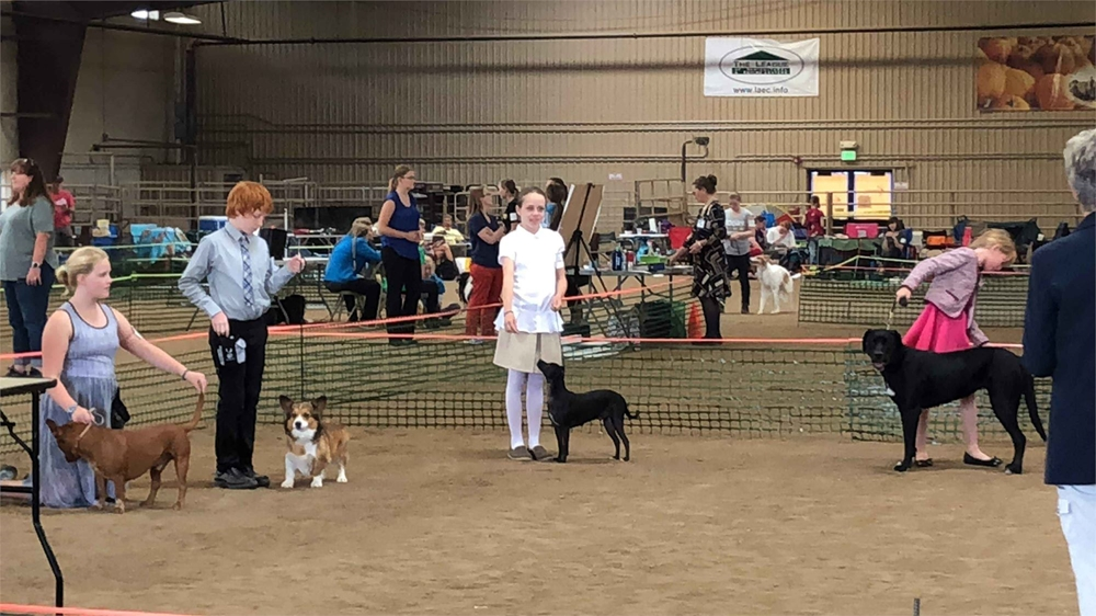 Four 4-H youths presenting their dogs to a judge