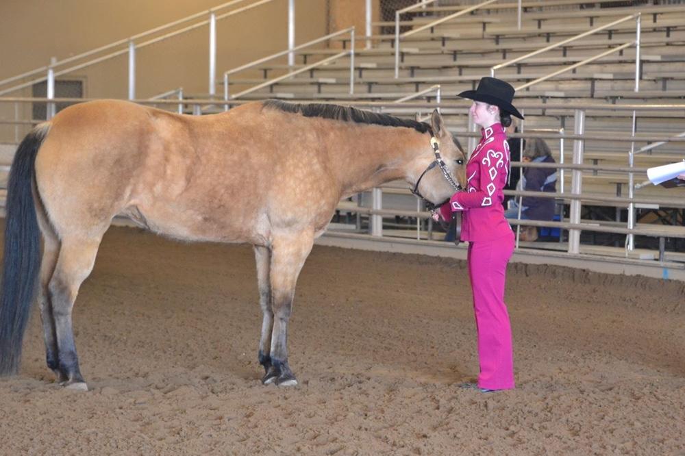 4-H youth showing her buckskin horse in showmanship
