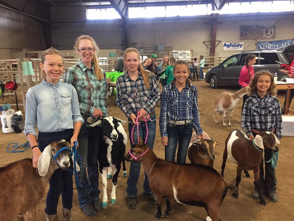 Utility Goats and their 4-H people