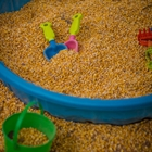 A child's pool filled with corn to play in at the Kid's Corral