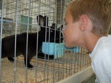 Boy peaking his head through a rabbit cage with a black rabbit inside