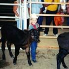 A small Bucket Calf exhibitor with his black calf