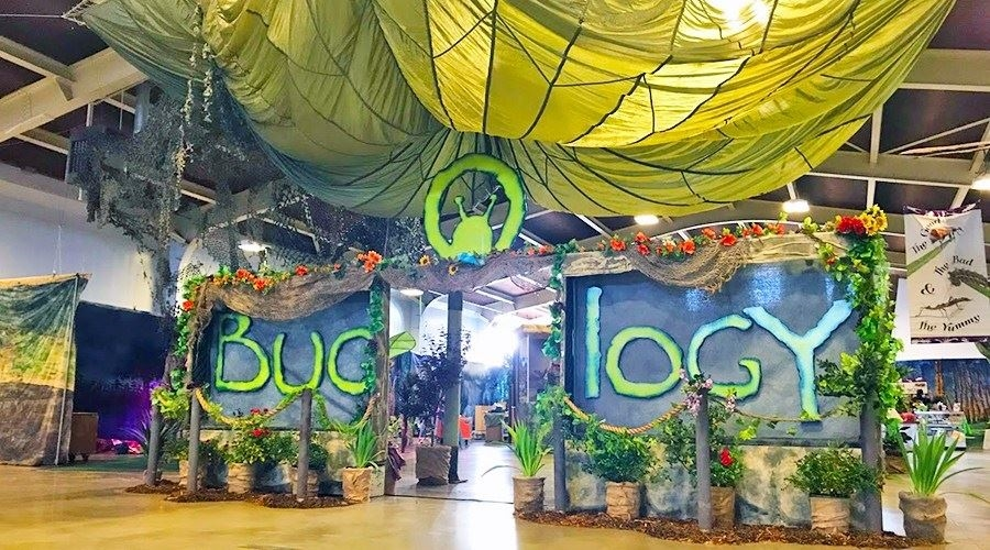 A giant grasshopper from Bugology STEM Exhibit
