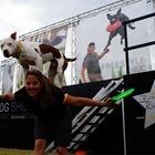 Canine Stars Stunt Dog Show