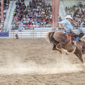 Cowboy riding a bronc