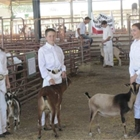 Exhibitors with their goats waiting to go into their class