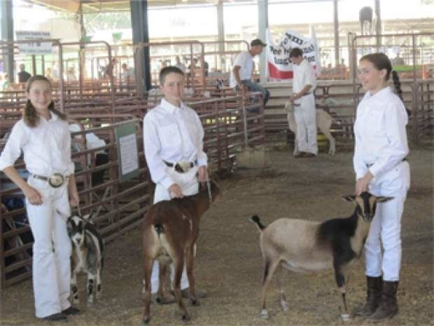 4-H kids waiting to show their dairy goats in a class