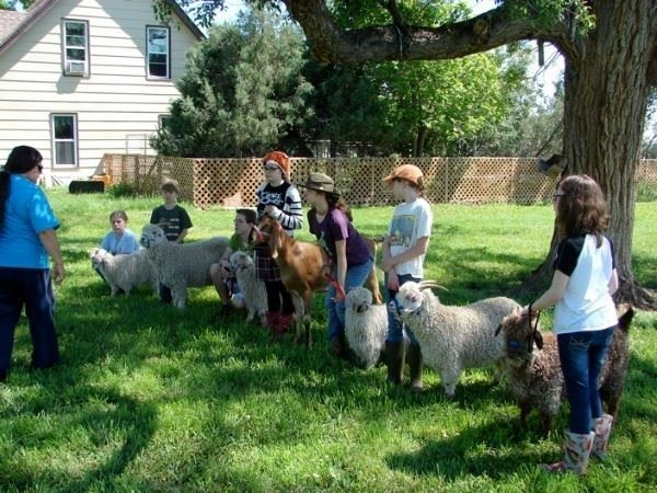 4-H fiber goat clinic with kids and their animals on the grass