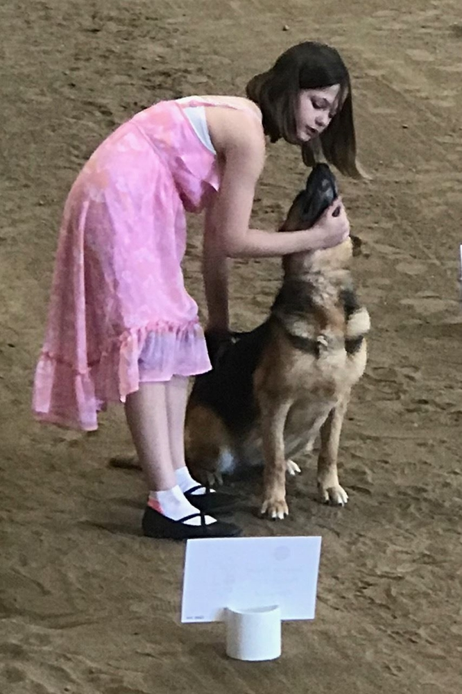 4-H girl getting her German Shepherd dog to sit in a class