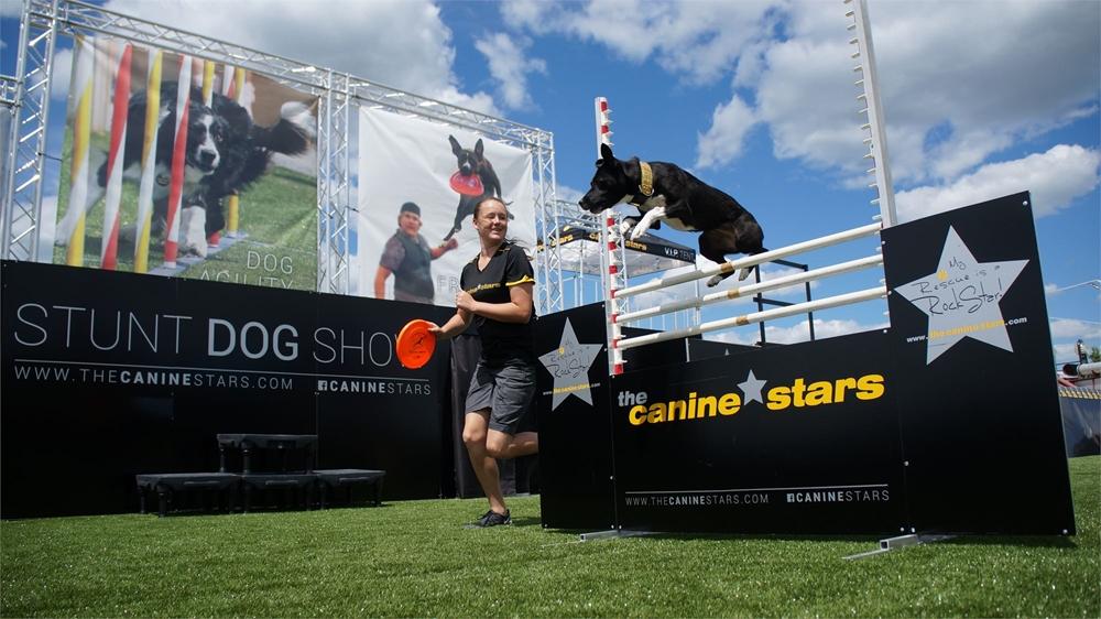 A black dog going over a high jump