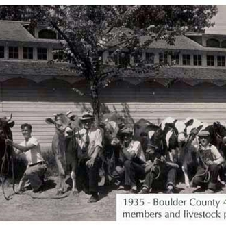 1935 4-H youths showing their cows