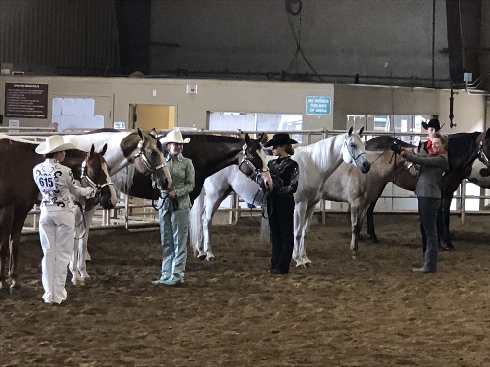 4-H kids with horses in Indoor Arena in a showmanship class