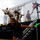 Canine Stunt Dogs with white dog on the back of a trainer