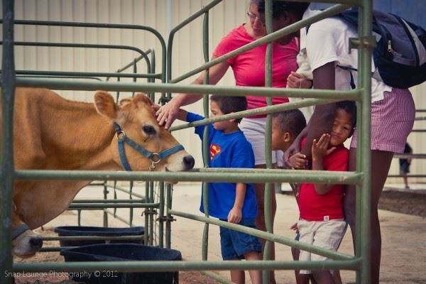 Small boy and adult petting a calf in the Kids Corral