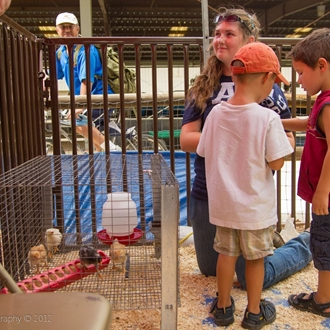 Kids petting baby chicks in the Kids Corral