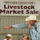 Announcer at the Livestock Market Sale