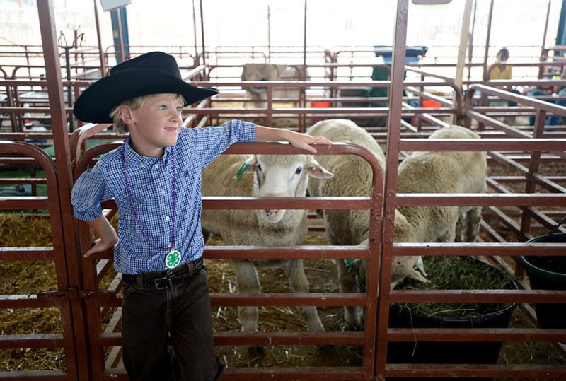 A little cowboy hanging out by sheep in a pen,