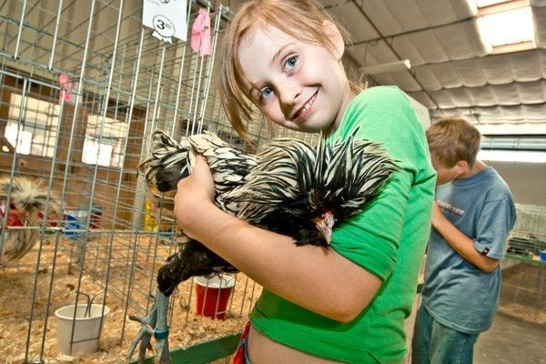 A young 4-H girl holding her Polish bantam chicken