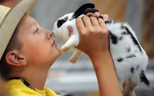 4-H boy holding his rabbit close to his face