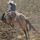 Cowboy riding a rodeo bronc
