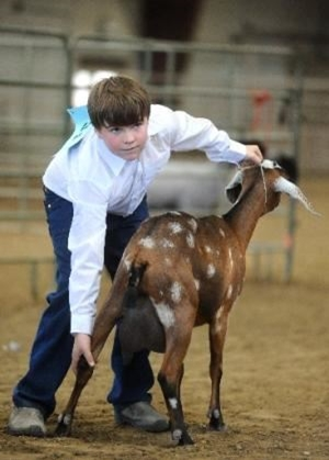 4-H youth showing a dairy goat in Round Robin event