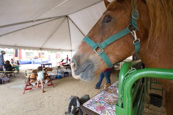 Large brown horse in FFA Petting Barn
