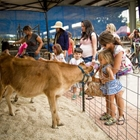 A child and an adult petting a Dairy calf through a fence