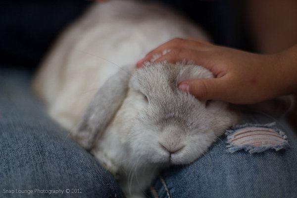 A person petting a white bunny