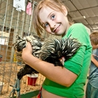 A young exhibitor holding her black laced Polish chicken